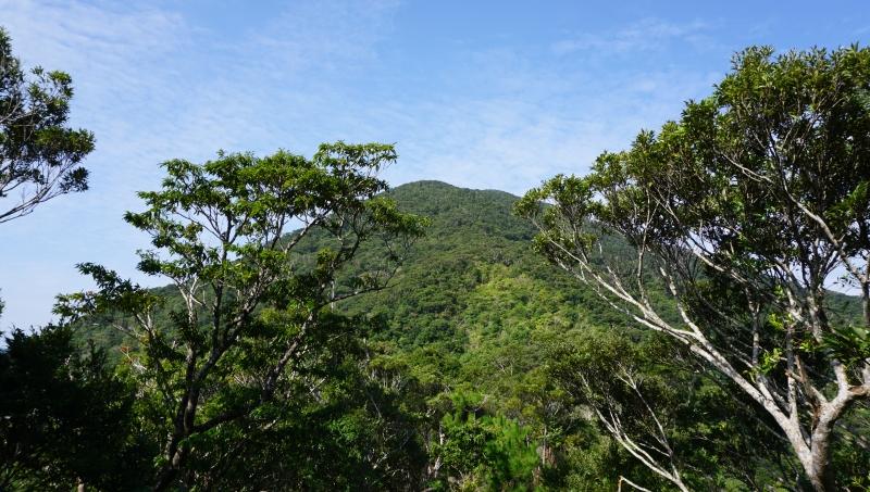 移住に向けてのスケジュールが見えてきた。いざ奄美大島へ!:アイキャッチ